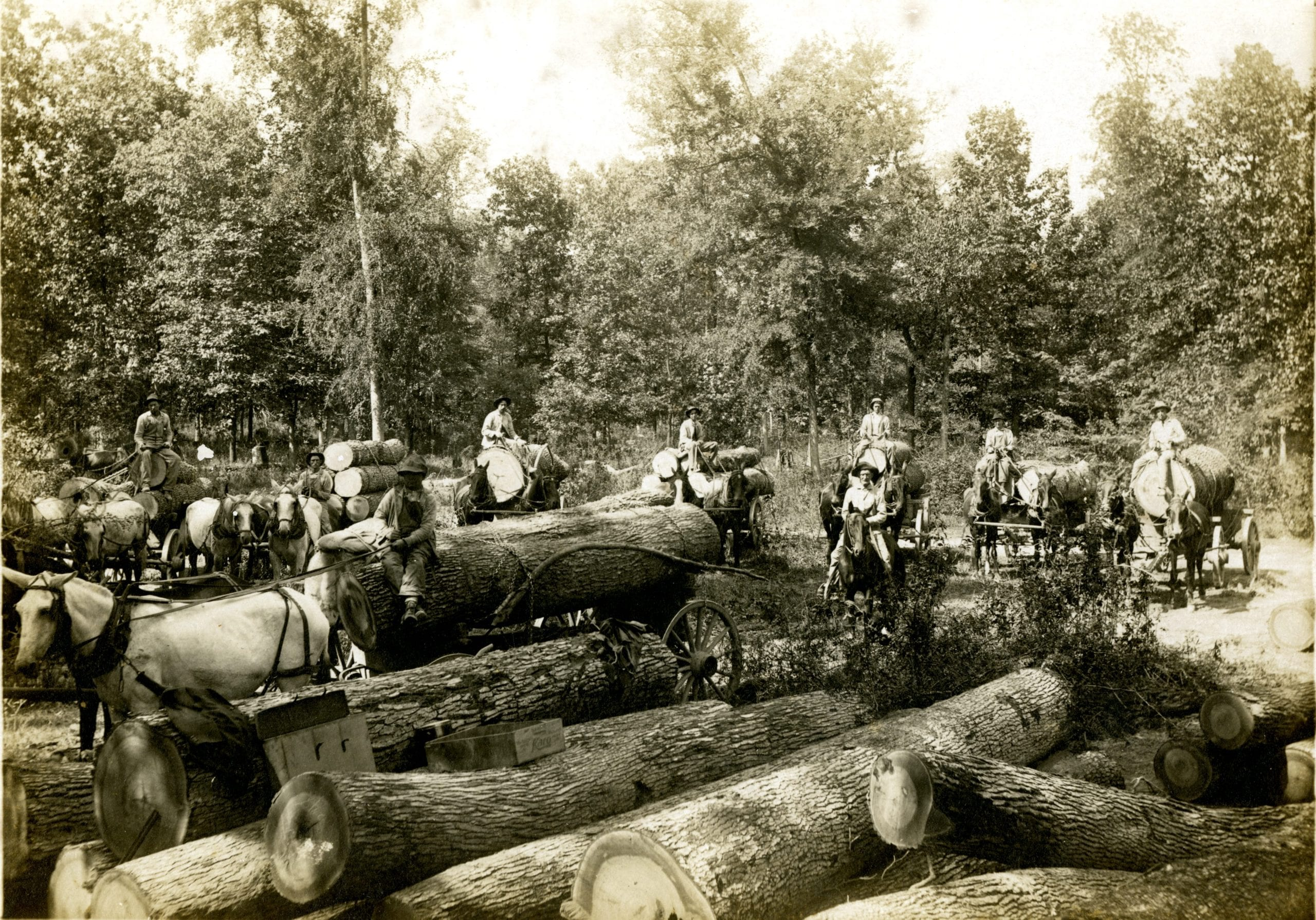 1924 – Logs Headed for the Mill