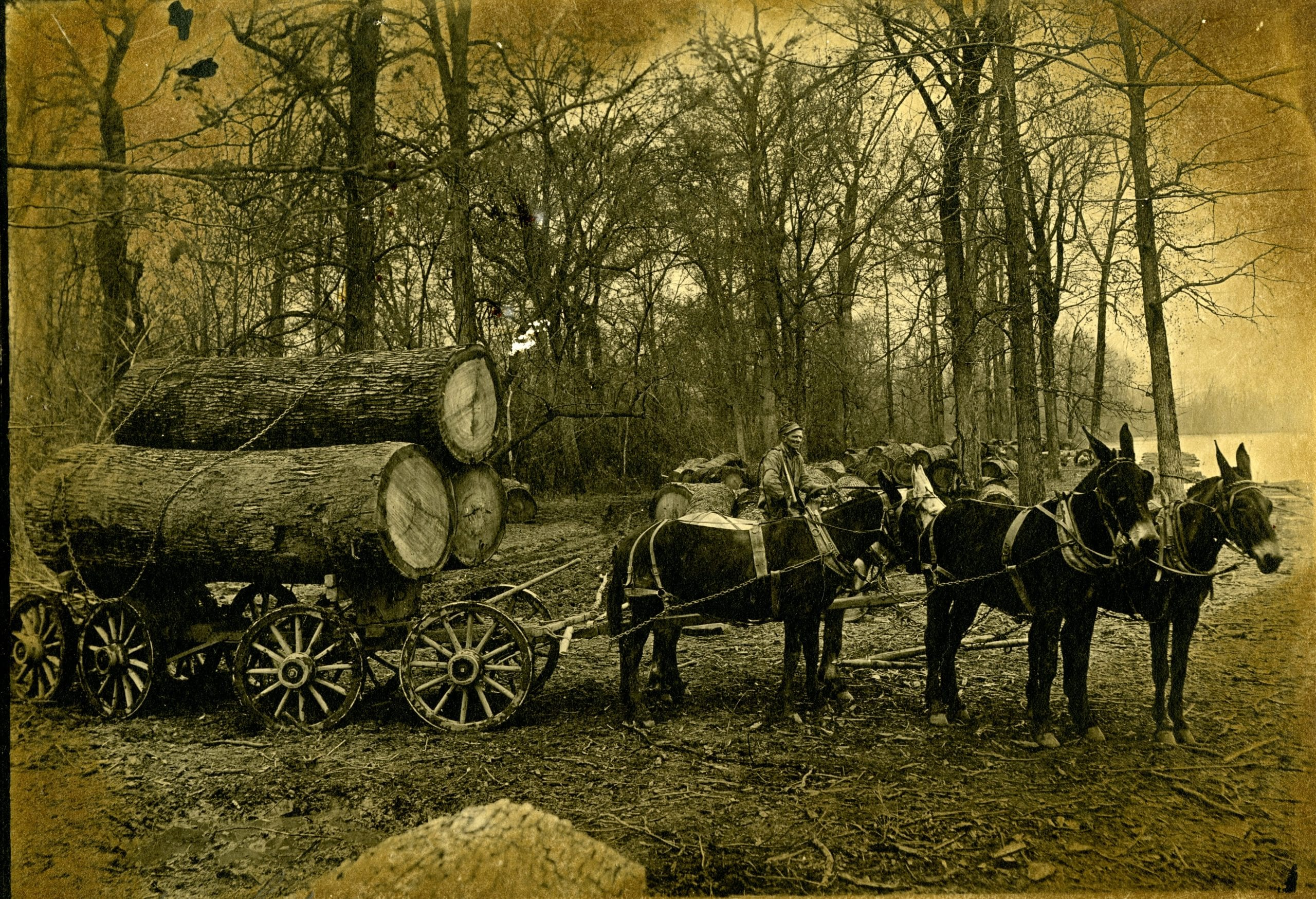 1920's – Huge Logs headed to the Mill