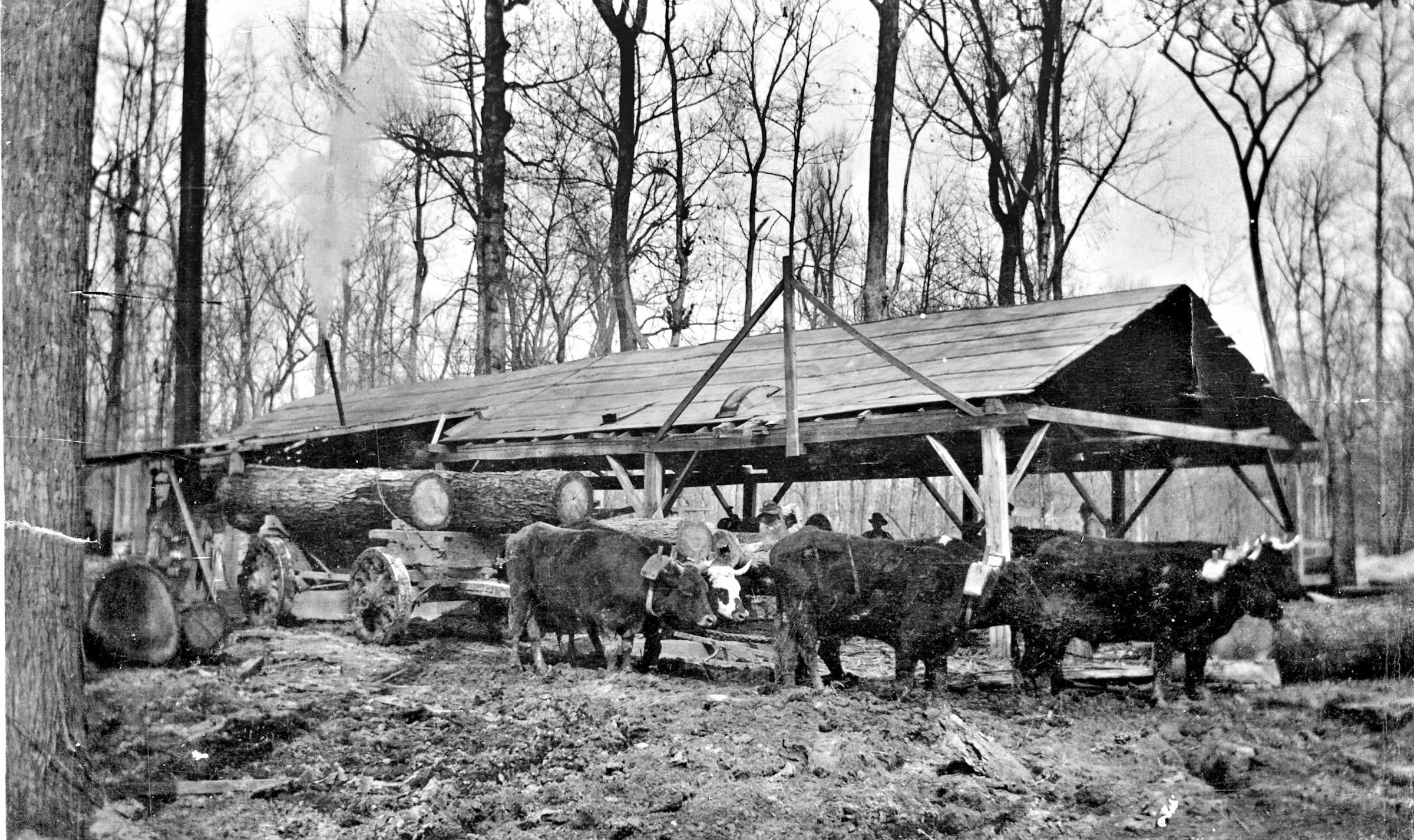1924 – Logs at Bob Logan's Mill