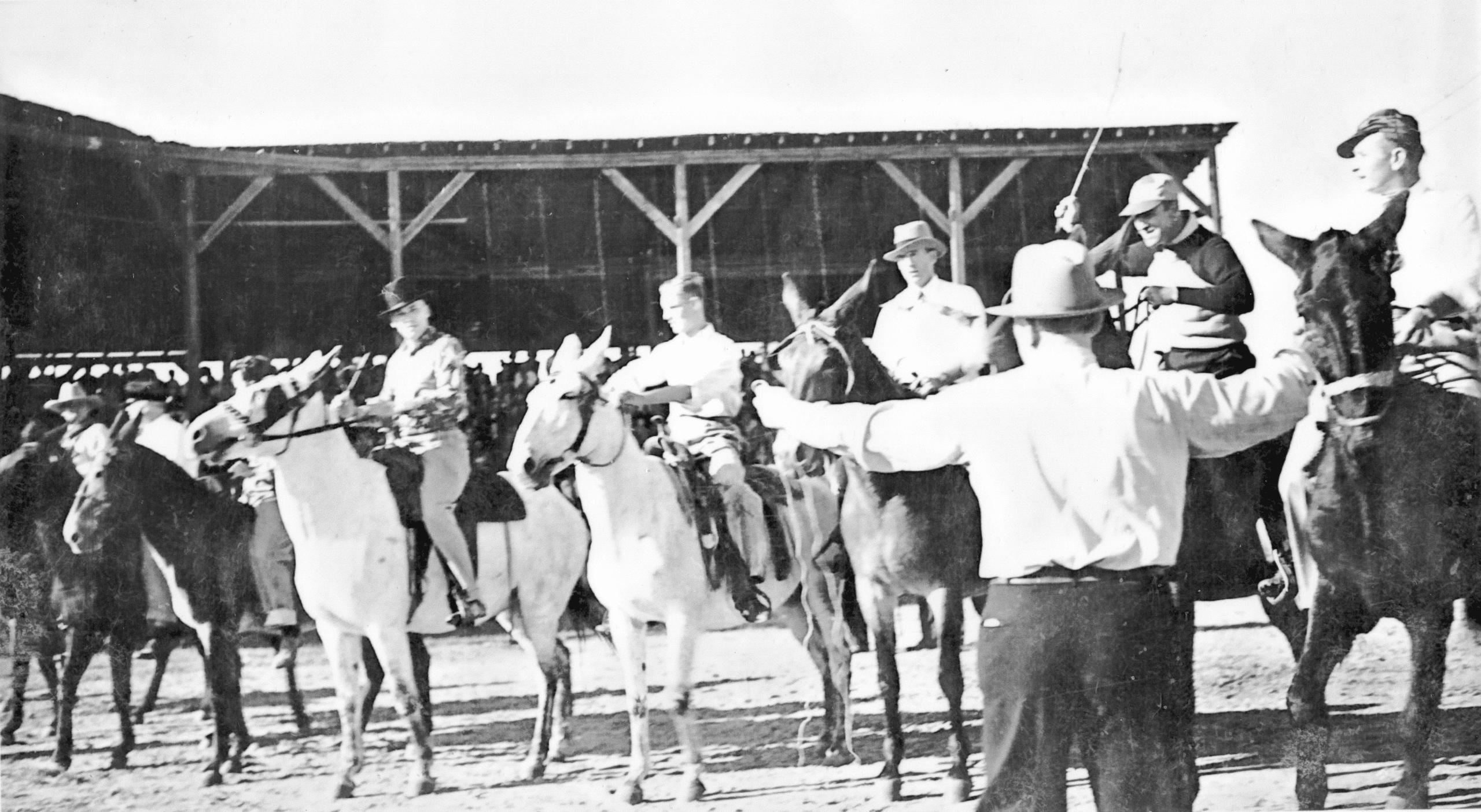 1940's – Mule Race